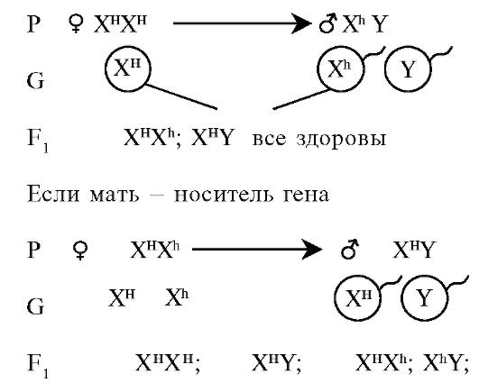 Хромосомная теория наследственности