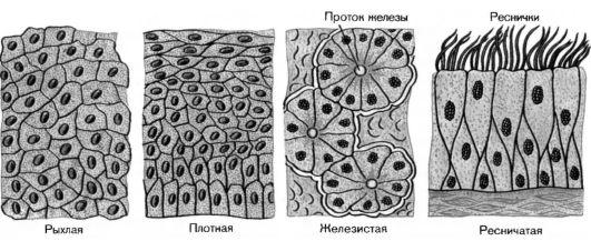 человека ткани картинки