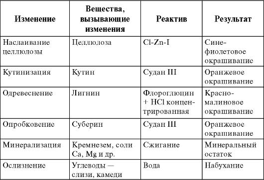 Таблица клеточная мембрана с рисунком