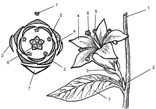 Построение диаграммы цветка: 1