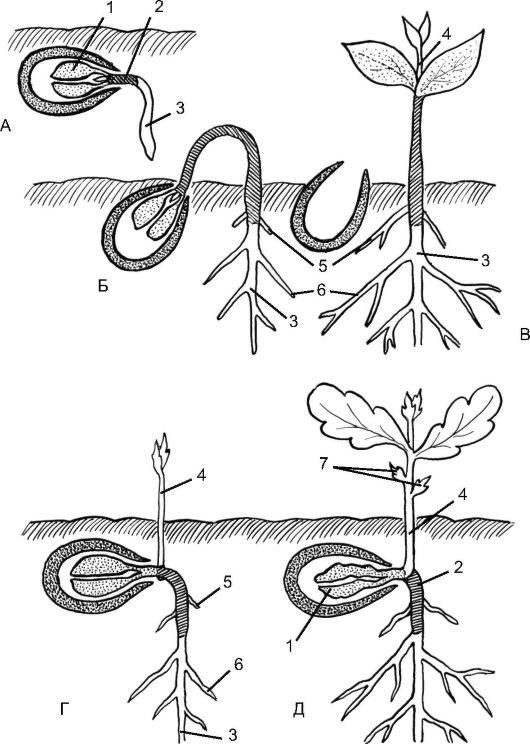 Схема надземного и подземного