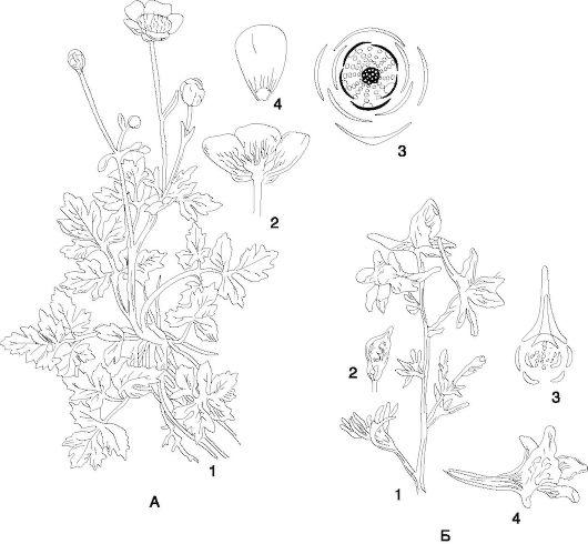 3 - диаграмма цветка