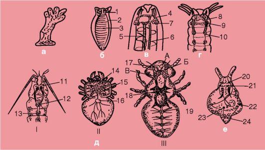 какие паразиты могут жить в волосах людей