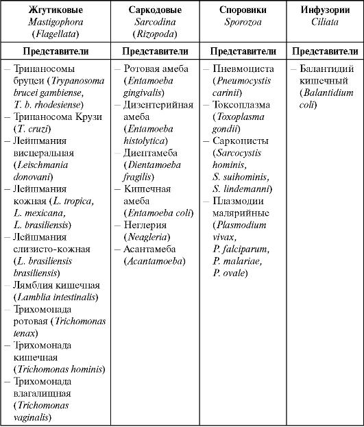 паразиты в организме человека лечение фото