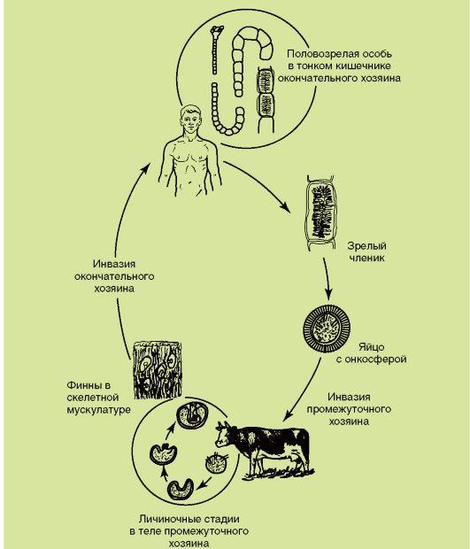 как проявляются паразиты в организме