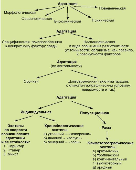 Схема 3. Адаптации человека к