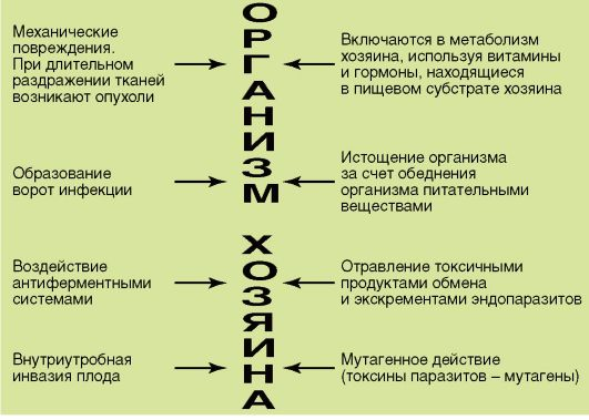 влияние паразитов на человека