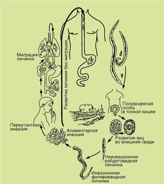 Схема жизненного цикла кошачьего сосальщика