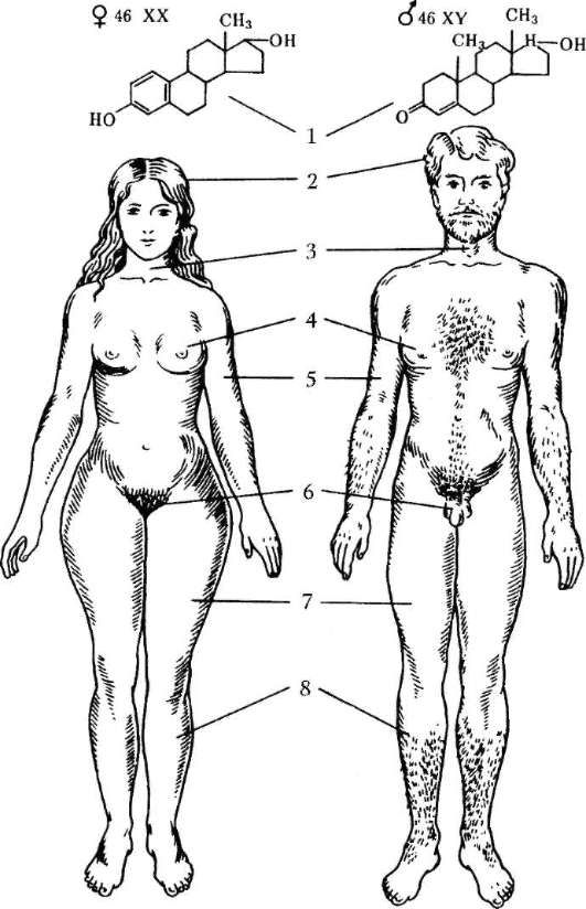 zavisimost-seksualnosti-ot-formi-ovoloseniya