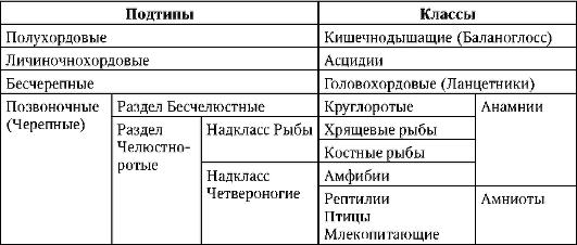 Систематика типа Хордовые