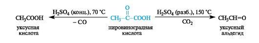 Образовавшаяся яблочная кислота легко выходит из митохондрии в цитозоль клетки и вновь окисляется в щавелевоуксусную