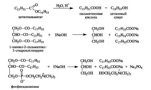 В организме гидролиз липидов