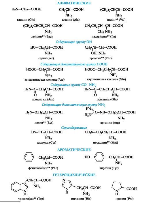 Белки и олигопептиды рецепт скачать стероиды
