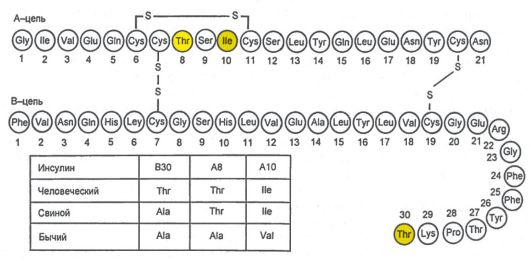 Схема первичной структуры