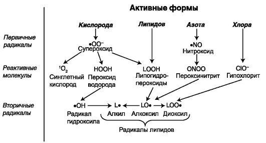 Активные формы кислорода