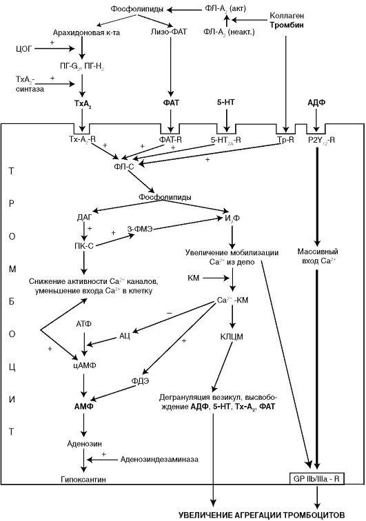 Схема каскадной активации