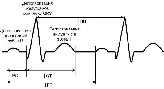 синусного узла (рис. 4.1).