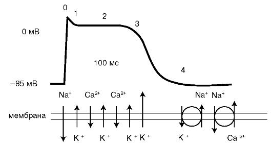 баланса ионов: обмен К+ на
