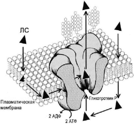 статины фармакогенетика