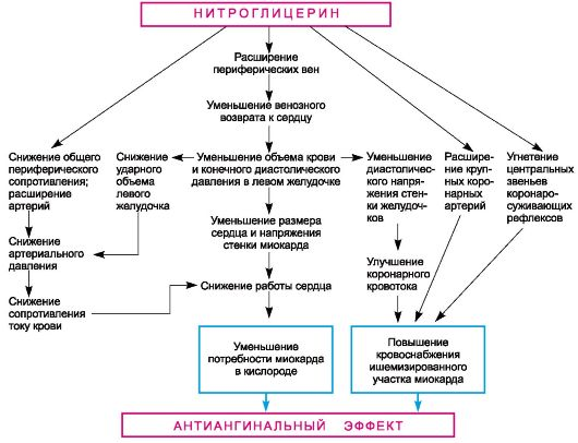 действие силденафила на сердечно-сосудистую систему