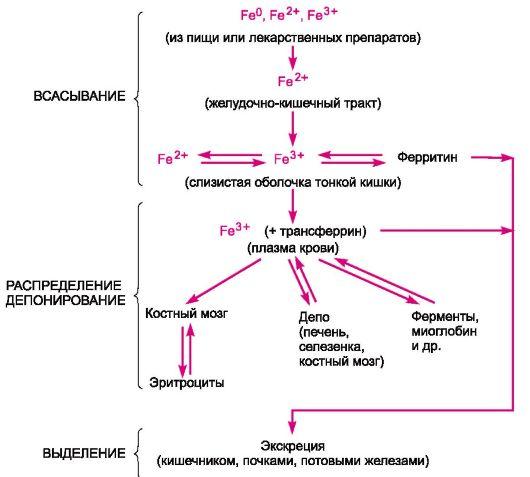 Схема 18.1.