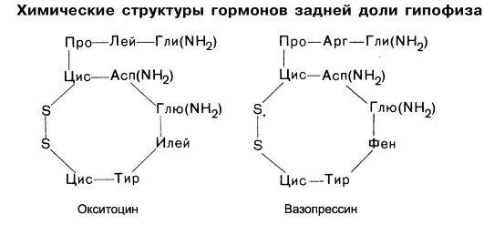 Все о гормонах Гипофиз Антидиуретический гормон