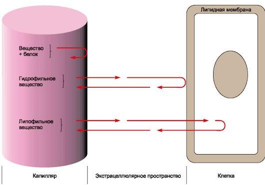 Распределение лекарственных средств в организме
