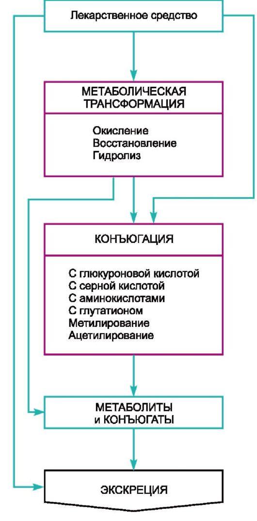 Схема II.1 Пути