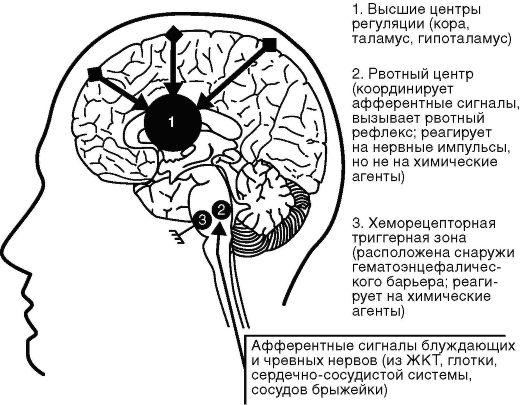 Механизм действия остеопатии