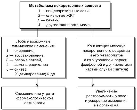 в организме (схема)