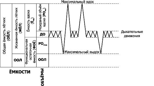 Спирограмма лёгочных объёмов и