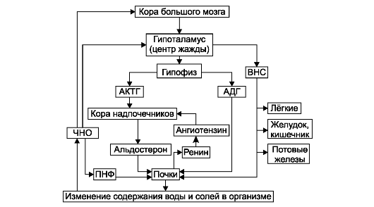Система регуляции водного