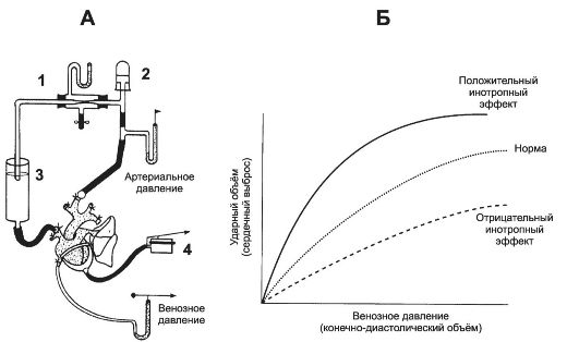 А - схема эксперимента