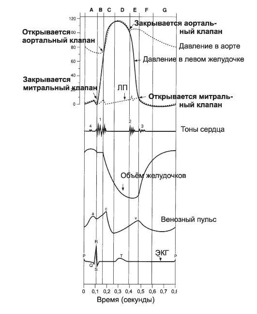 Суммарная характеристика цикла