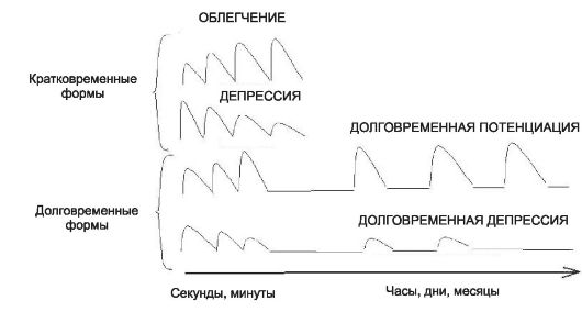 Формы синаптической