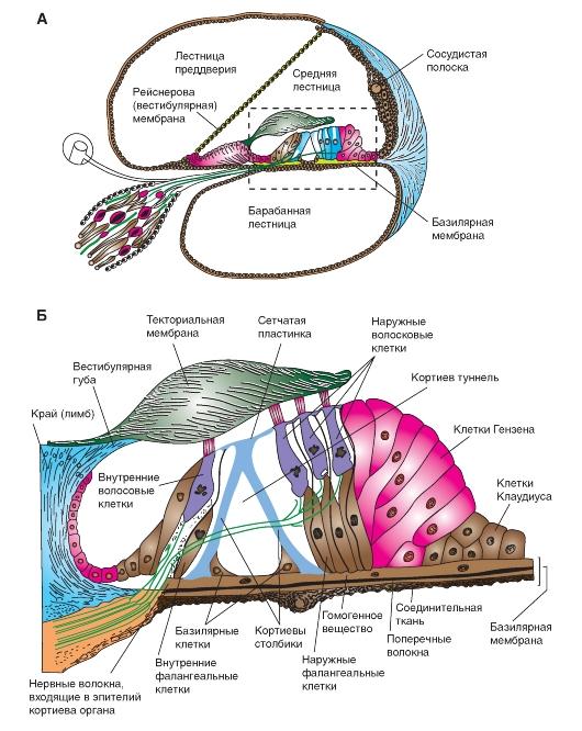 А - схема поперечного разреза