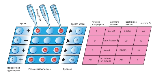 группе крови антигены