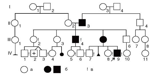 Пример составления родословных
