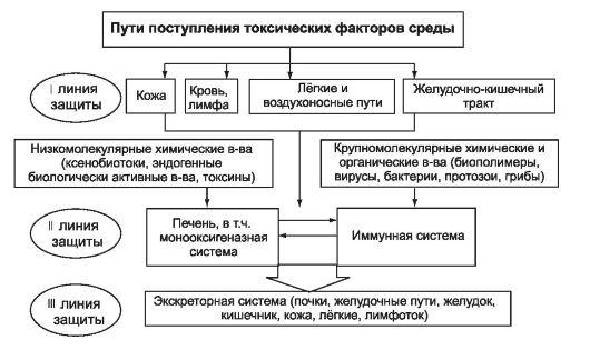 Схема функционального