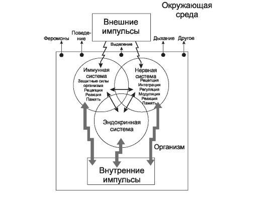 Влияние экологии на имунную систему