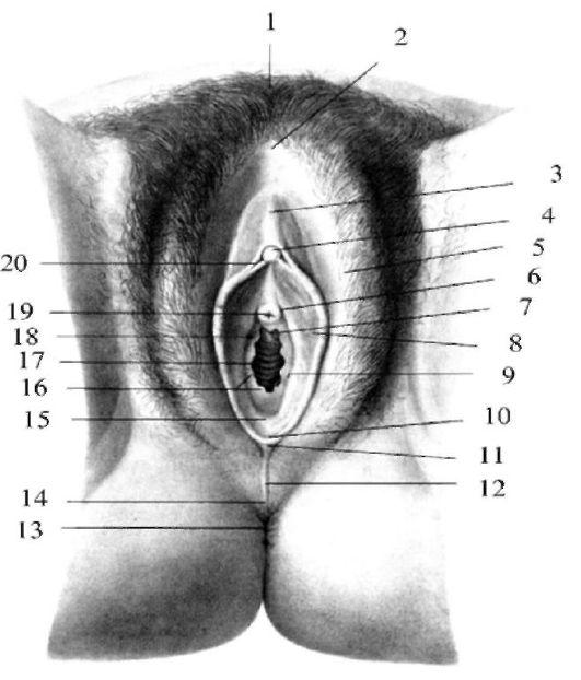 Супер порно женская сперма только шортики