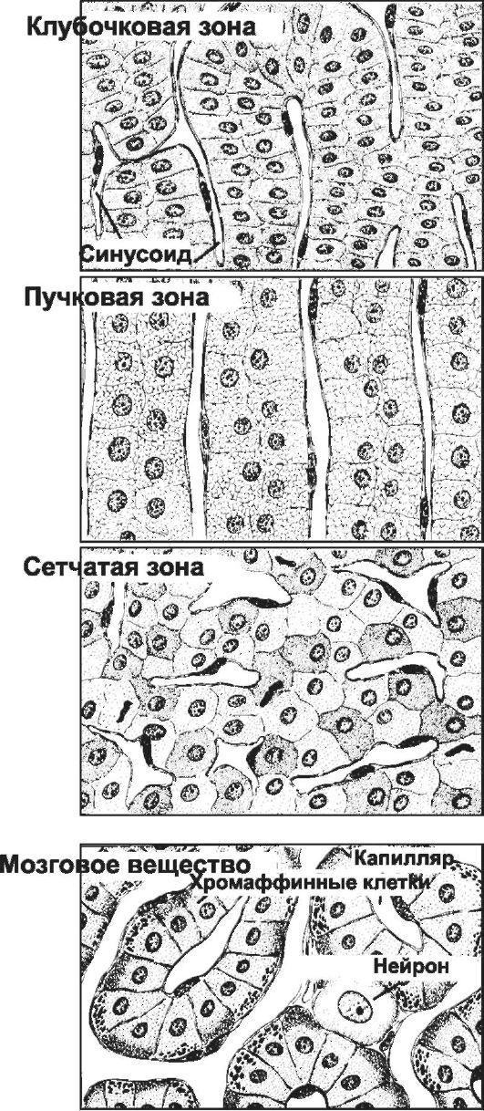 Ткань Хромаффинная фото