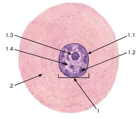Строение клетки по данным