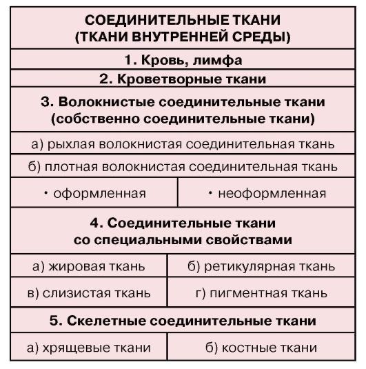 (2) Кроветворные ткани