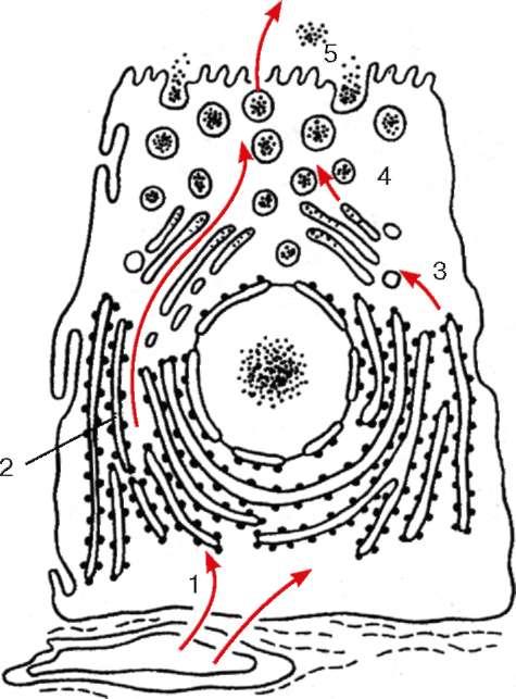 Цитология глава 4 учение о клетке