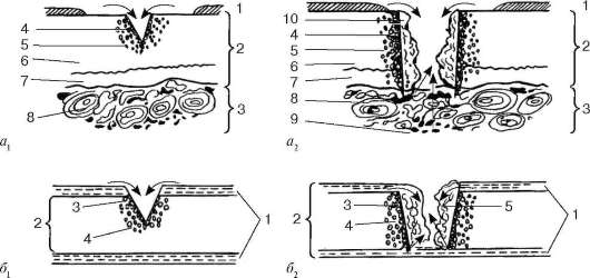 вид соединительной ткани с