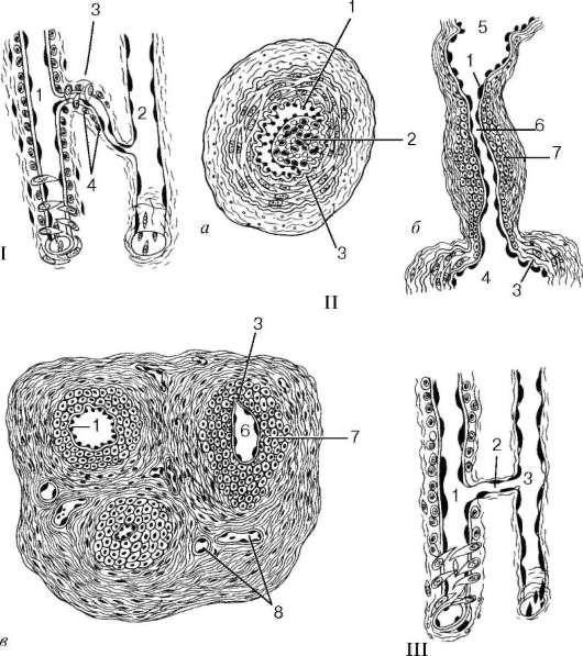 Анастомоз