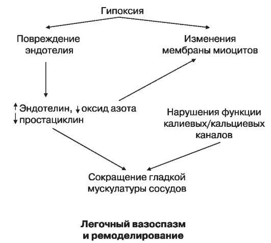 Схема патологических изменений