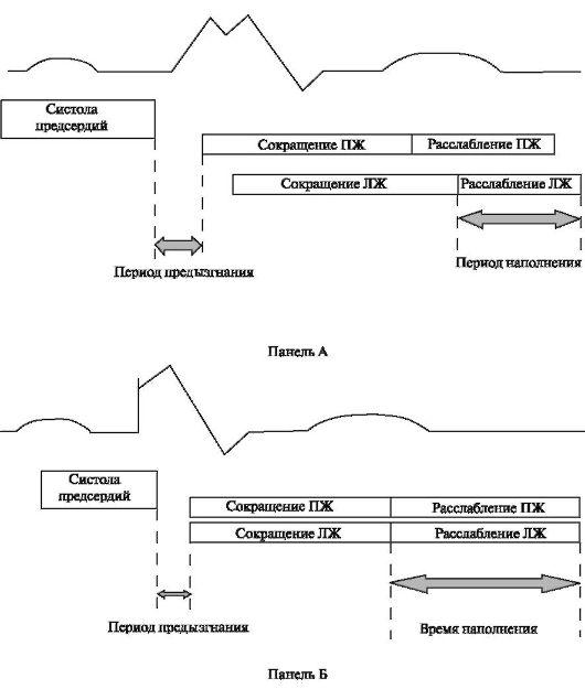 структуры сердечного цикла