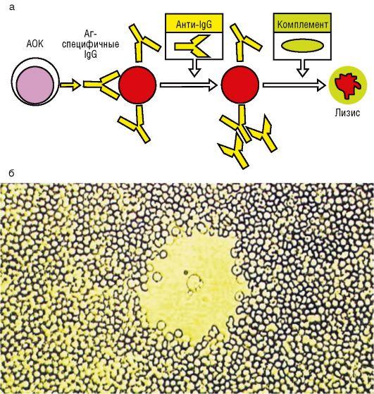 Рис. 2.5. Выделение окон лимфоцитов, моноцитов
